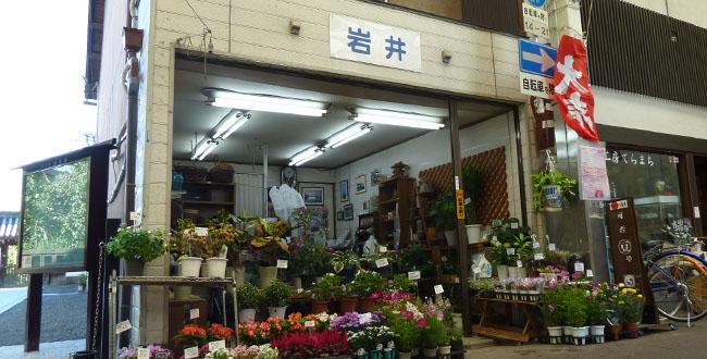 京都三条会商店街|園芸店・岩井