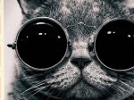 三条会のリボンスタンプで猫エコバッグプレゼント