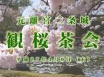 二条城の観桜茶会|京都三条会商店街の周辺情報